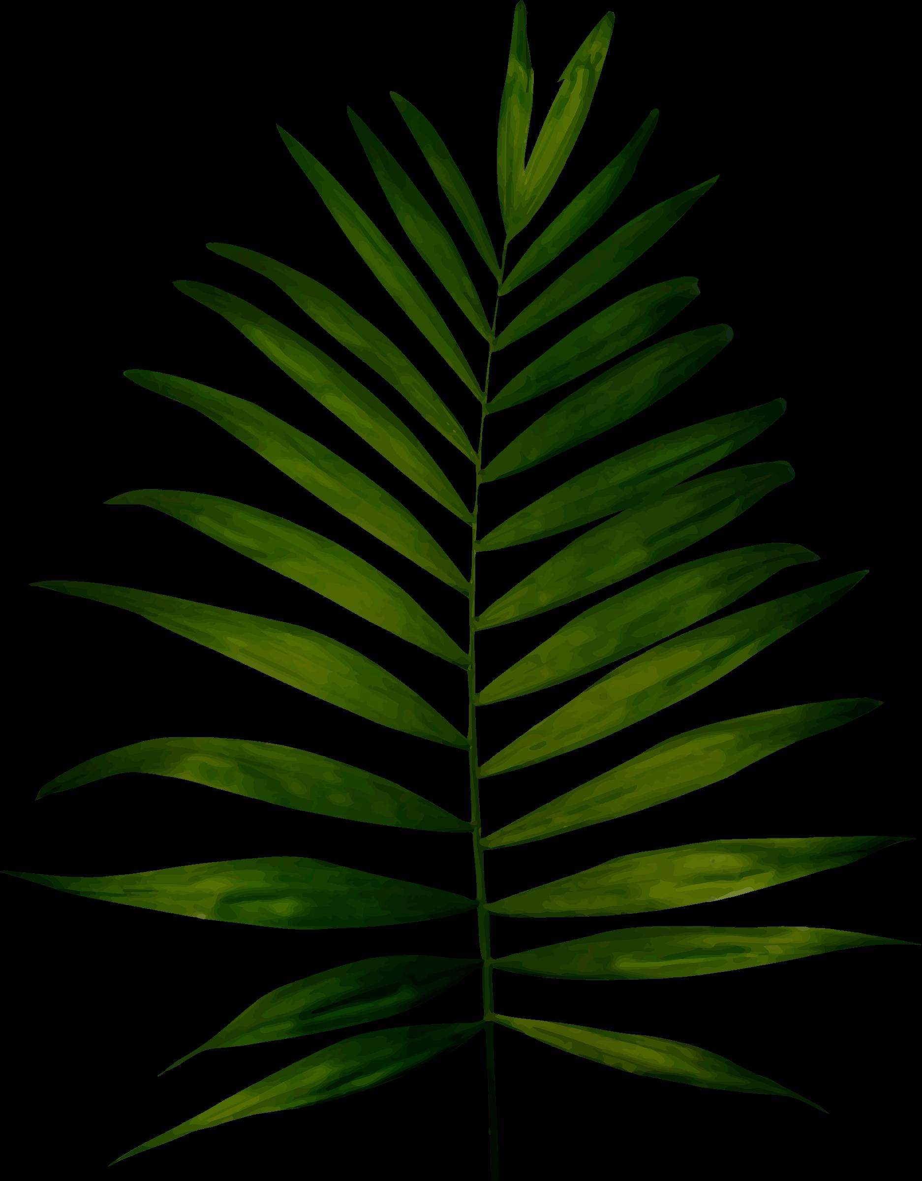 Big image png. Woodland clipart fern leaf