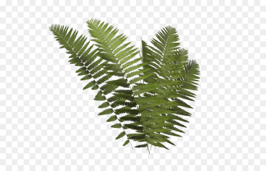 Plant leaf tree transparent. Fern clipart fern frond