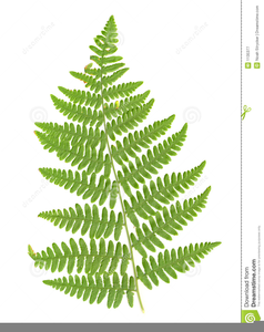 Fern clipart fern frond. Free images at clker