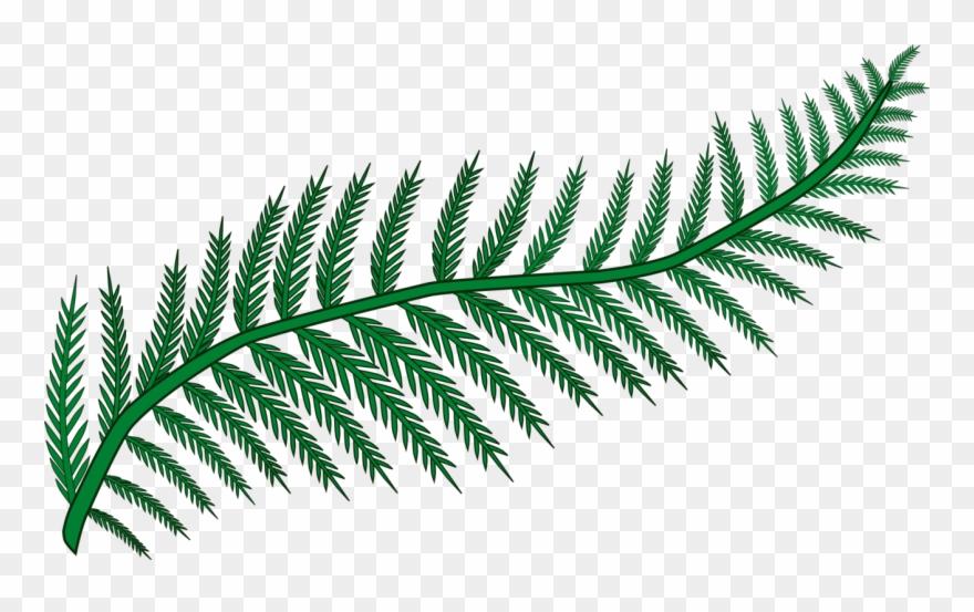 Fern clipart fern frond. Plants leaf vascular plant