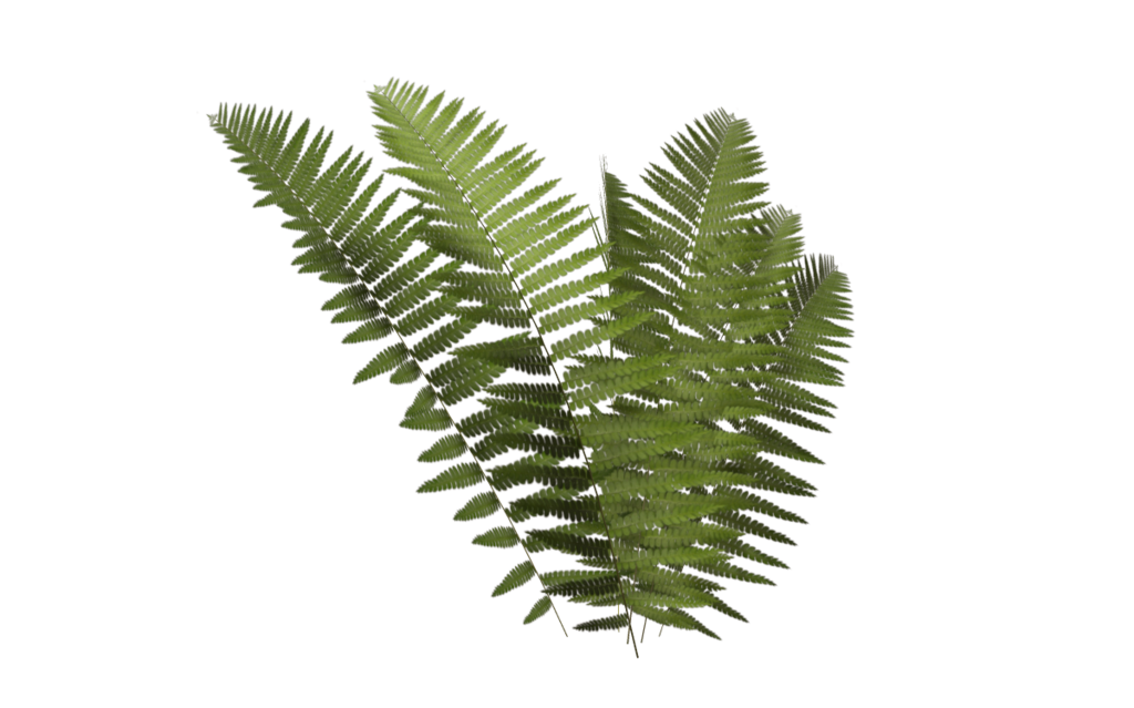 Ferns transparent png pictures. Leaf clipart clear background