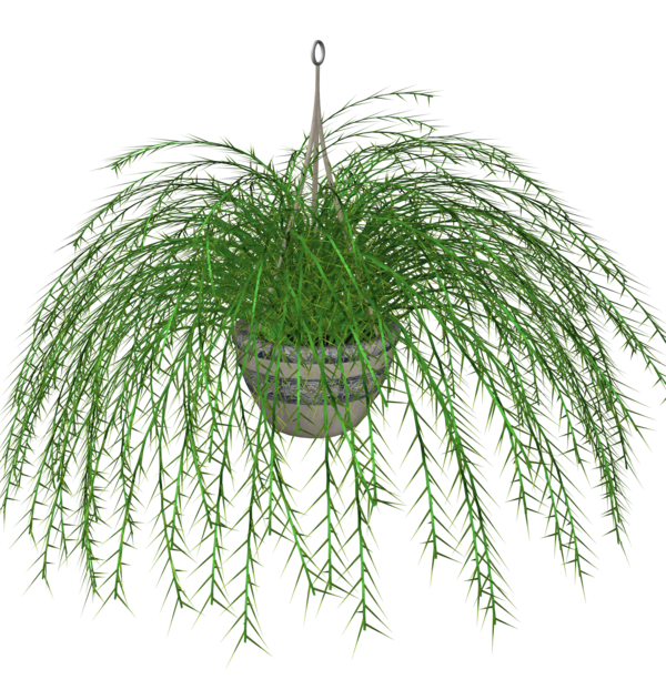 Outside clipart plant. Hanging fern stock by