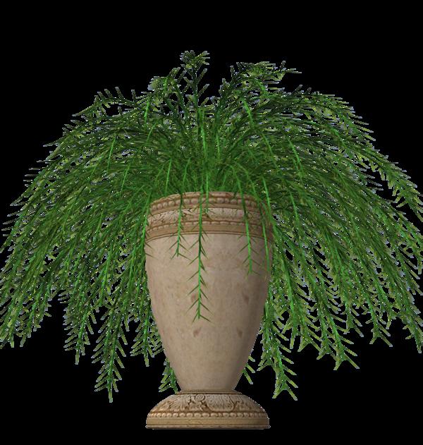 Fern clipart fern plant. Stock in pot vase