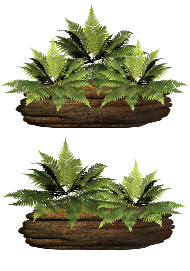 Stock by collect and. Fern clipart fern plant