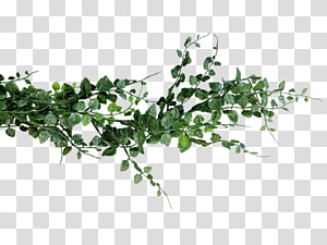 Flower png images free. Fern clipart garland