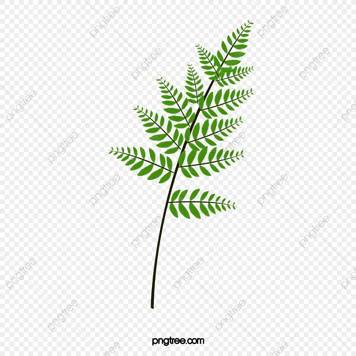 Fern clipart graduation. Green leaves plant real