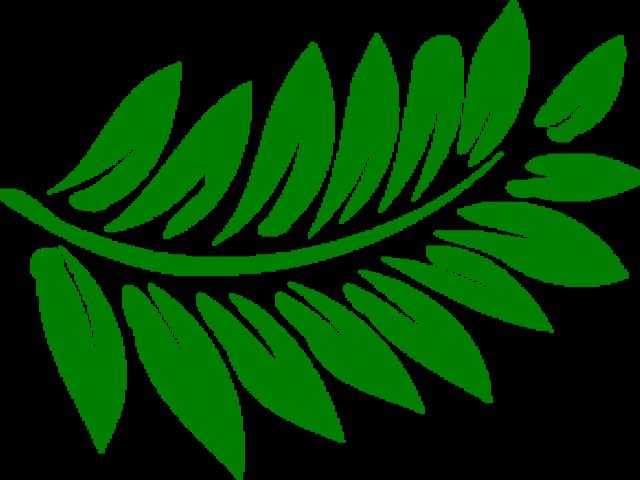 Fern clipart green fern. Free download clip art