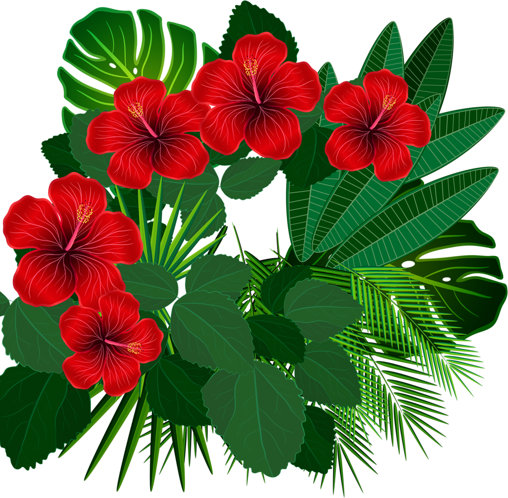 Hibiscus clipart aloha.  png clip art