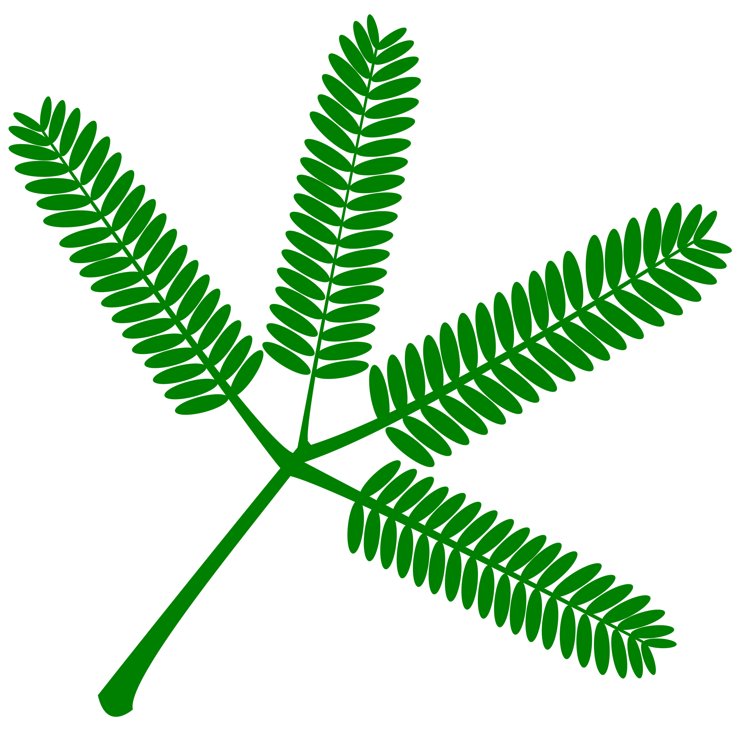 Mimosa set of twigs. Fern clipart horsetail
