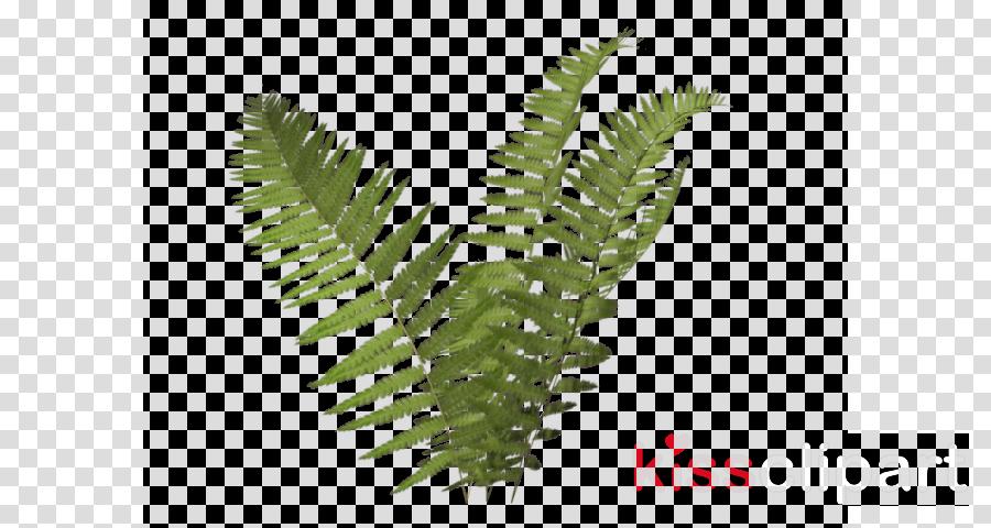 Fern clipart horsetail. Leaf terrestrial plant transparent