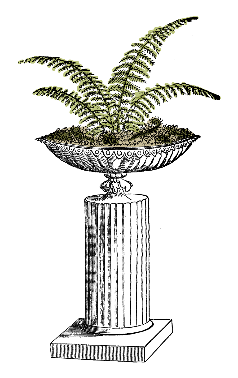 Fern clipart illustrated. Antique images potted digital