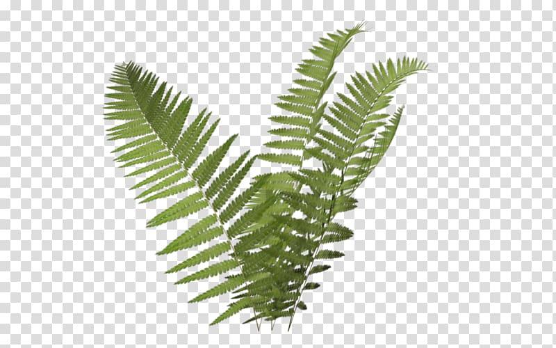Green leaf illustration plant. Fern clipart illustrated