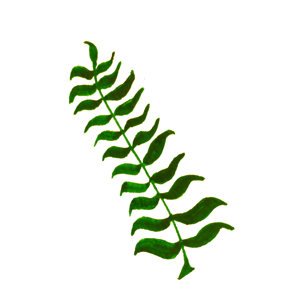 Onlinelabels clip art calligraphic. Fern clipart illustrated