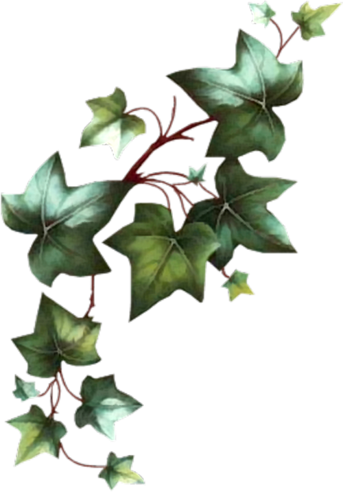 Fern clipart ivy. Luv nothing but love