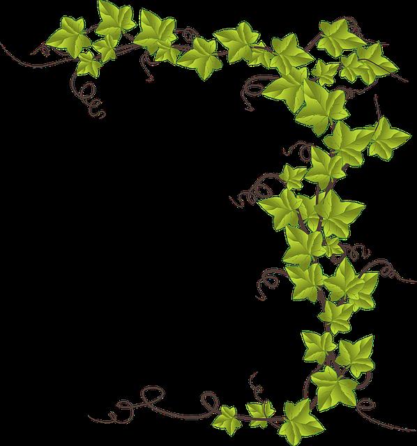 Free image on pixabay. Fern clipart ivy