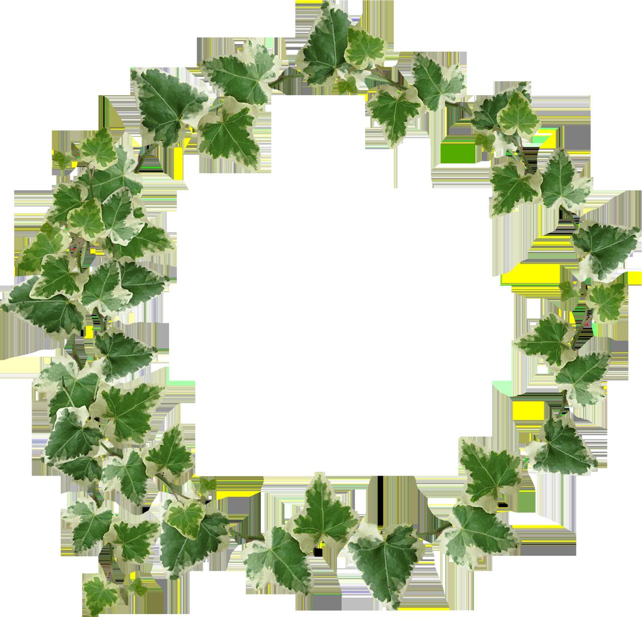 Ivy crown transparency yebbi. Garland clipart fern