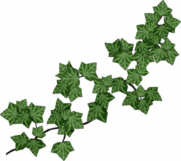 Holiday clipart ivy. Joli tube pinterest clip