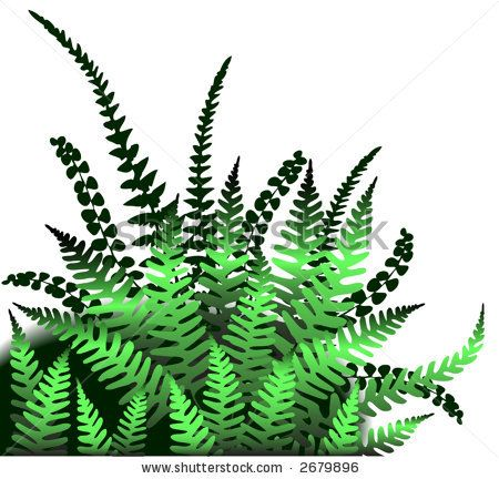 Trees clip art editable. Fern clipart jungle