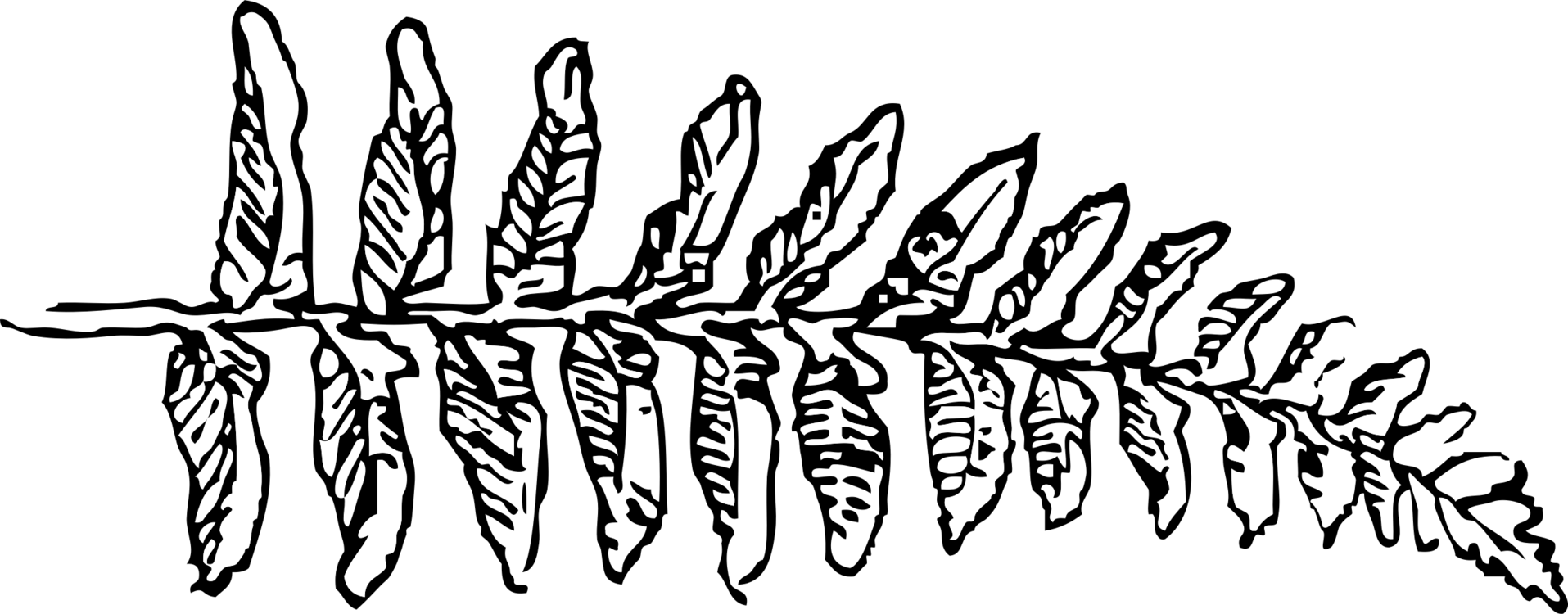 Plant twig png royalty. Fern clipart line art