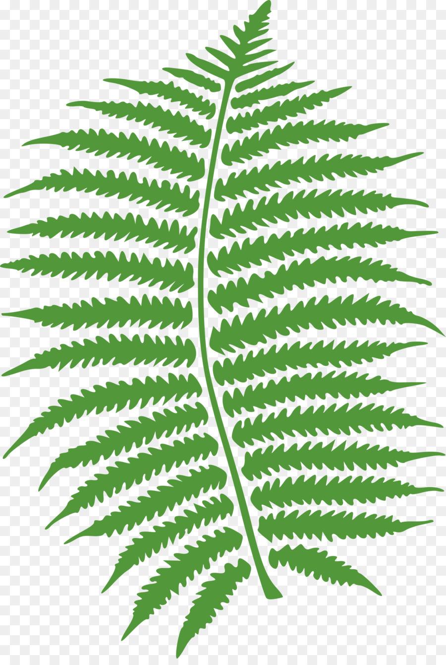 Fern clipart line art. Christmas leaf plant transparent