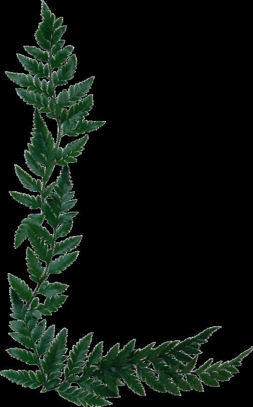 Fern clipart olive.  png cricut clip
