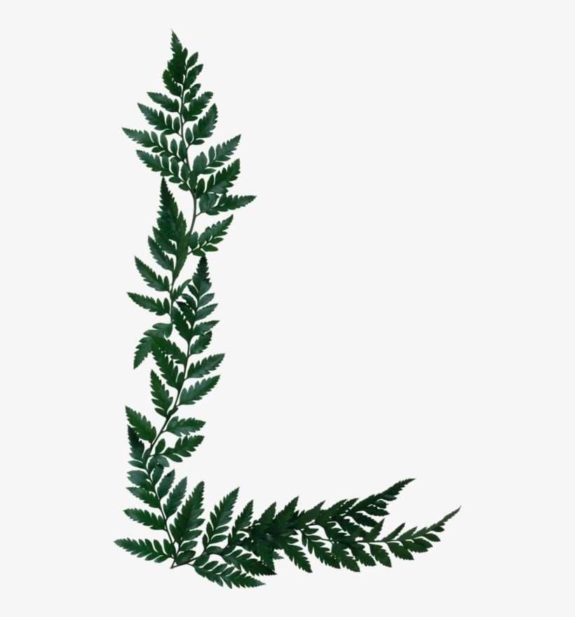 Silver page border transparent. Fern clipart olive