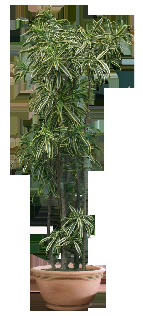 Plants transparent pictures free. House plant png