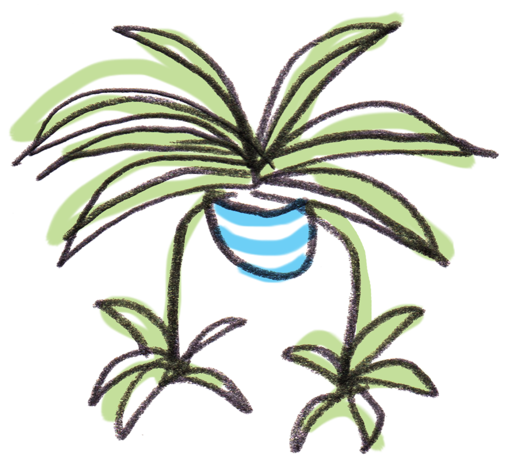 Seedling clipart plantae. Welcome to spiderplant houseplant