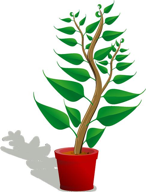 Fern potted fern