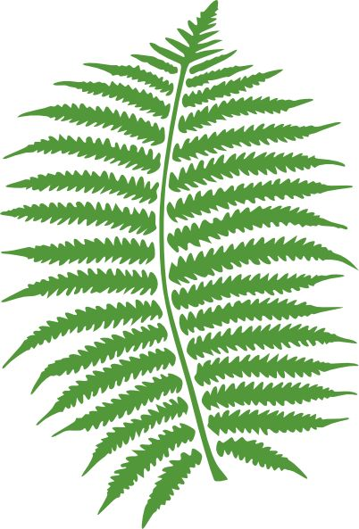 Free tree cliparts download. Fern clipart prehistoric plant