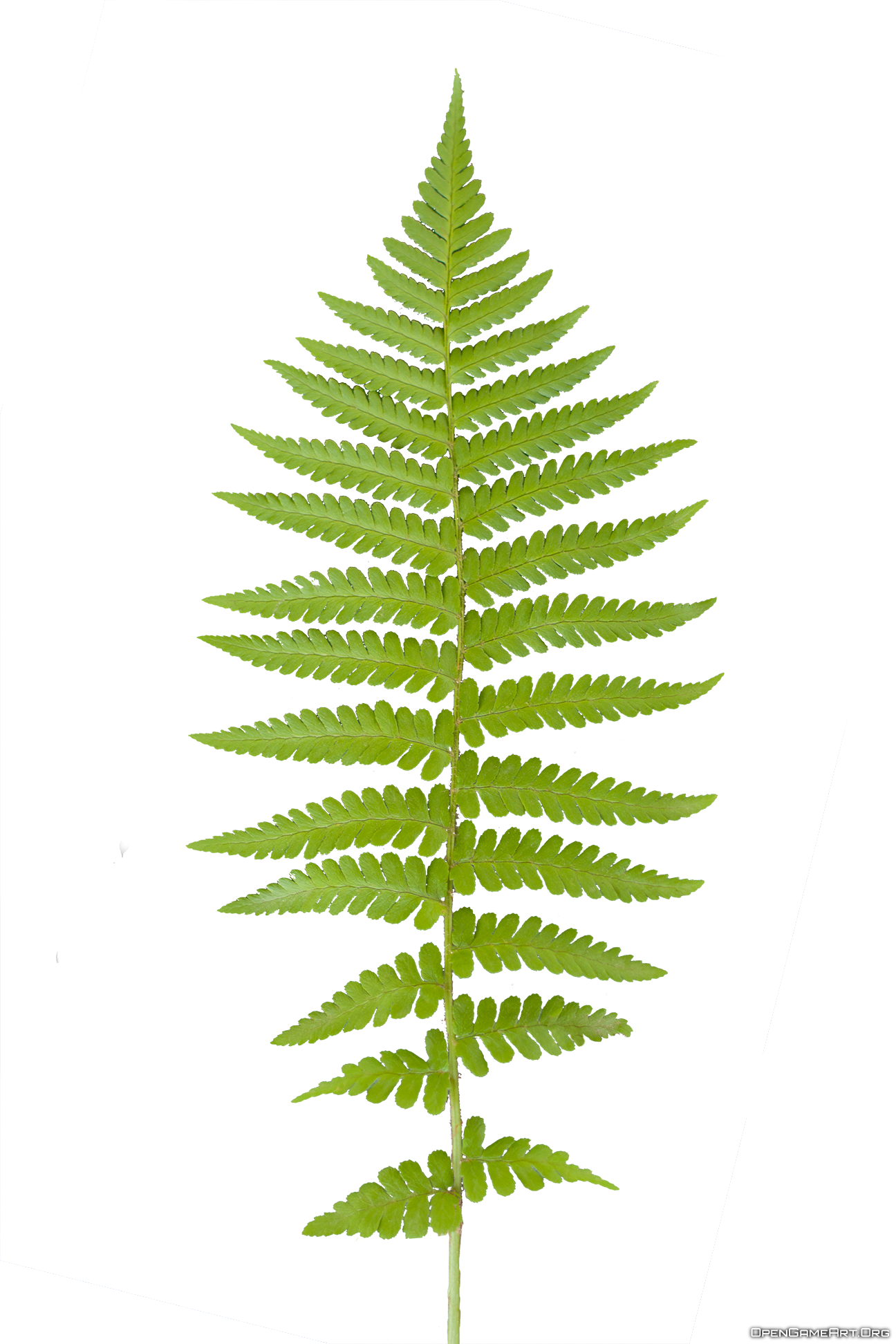 Fern clipart prehistoric plant. Ferns transparent png pictures