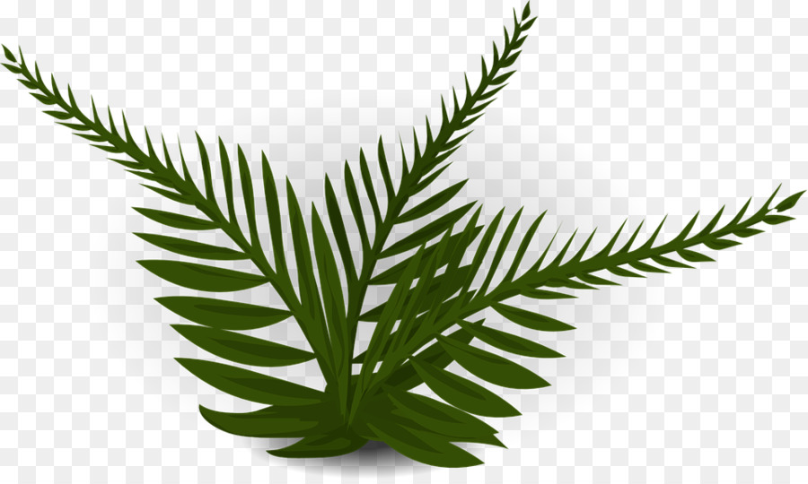 Fern clipart prehistoric plant. Plants background leaf transparent