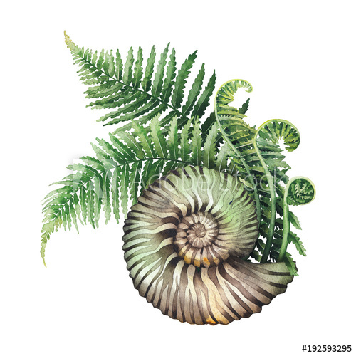 Fern clipart prehistoric plant. Watercolor seashell and branches