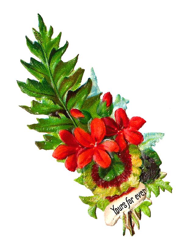 Fern clipart red fern. Antique images vintage digital