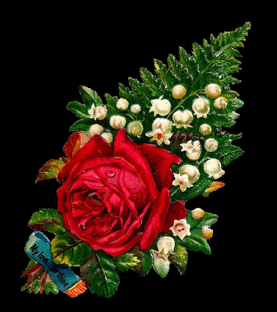 Fern clipart red fern. Antique images free digital