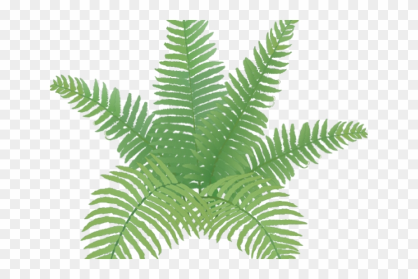 Easy plant drawing hd. Fern clipart simple