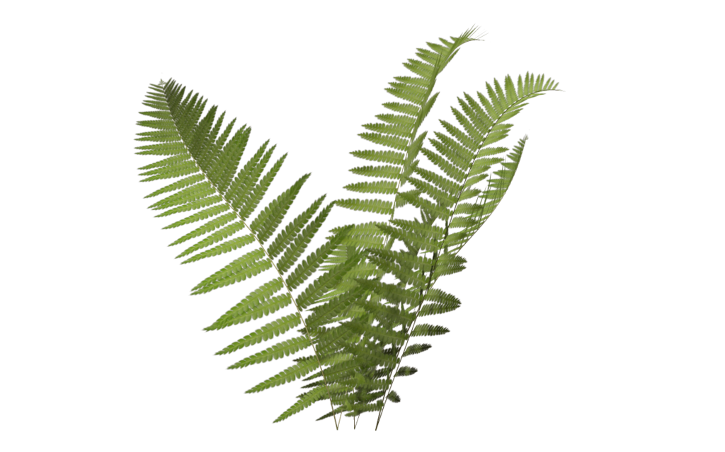 Fern clipart simple. Please if you download