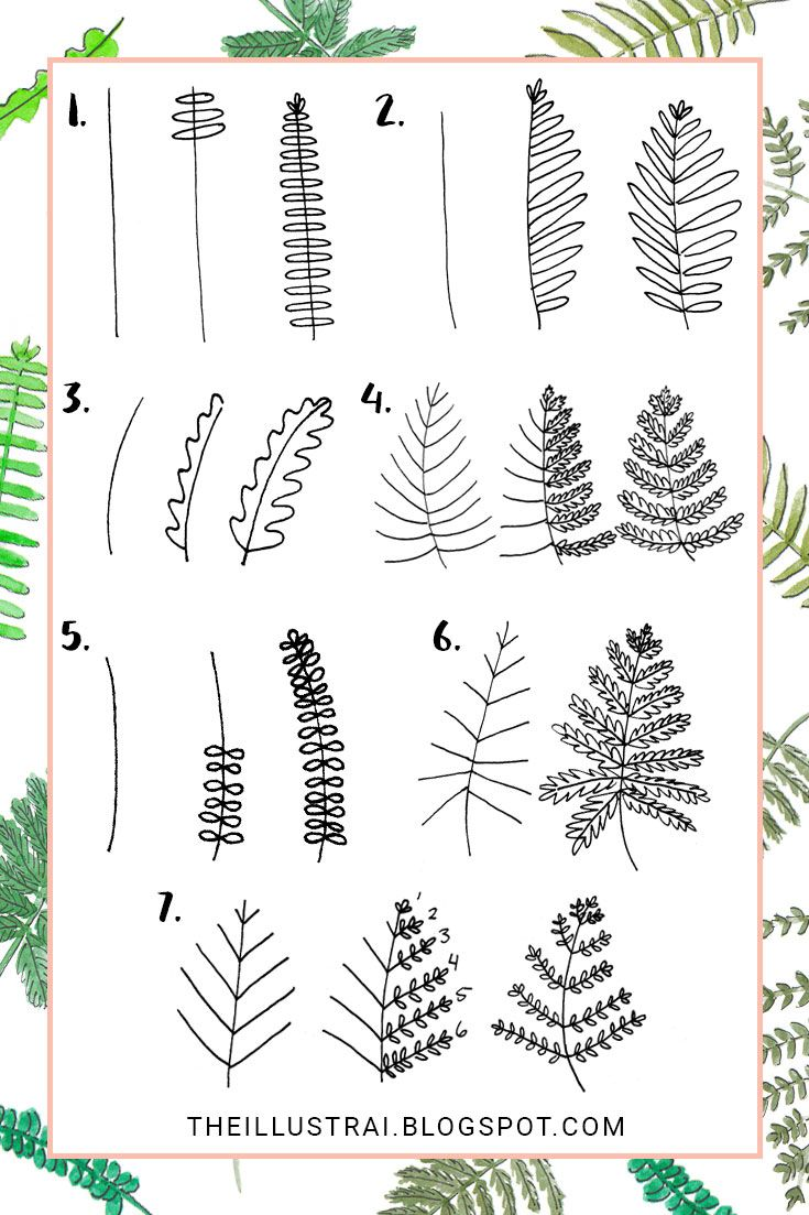 Fern clipart simple.  ways to draw