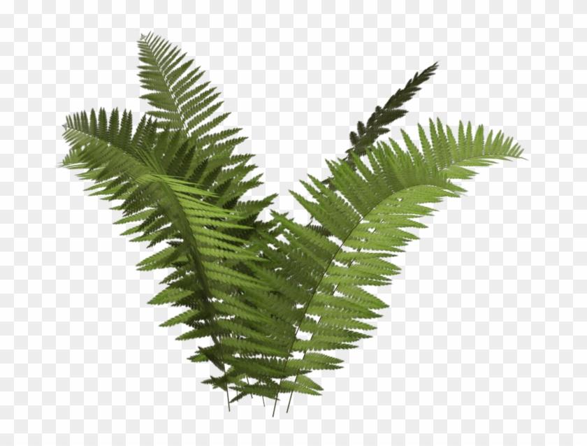 Different plant transparent background. Fern clipart simple