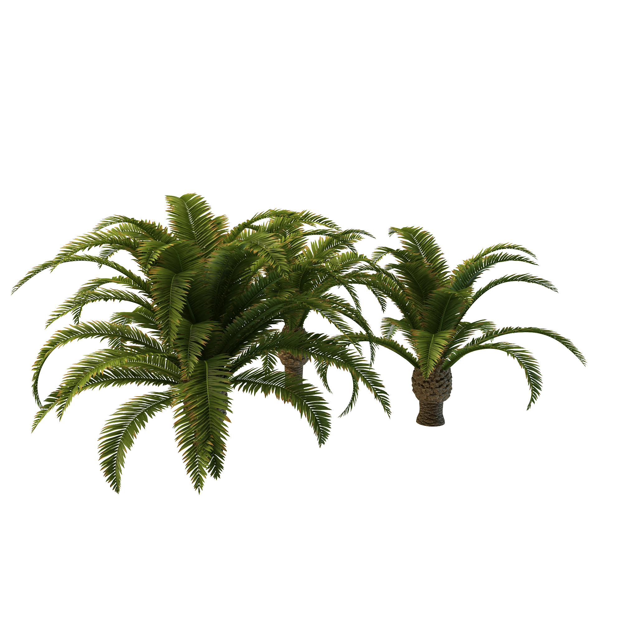 Long tree png free. Palm clipart fern