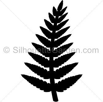 Pin by muse printables. Fern clipart stencil