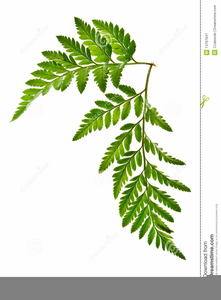 Fern clipart stencil. Ferns free images at