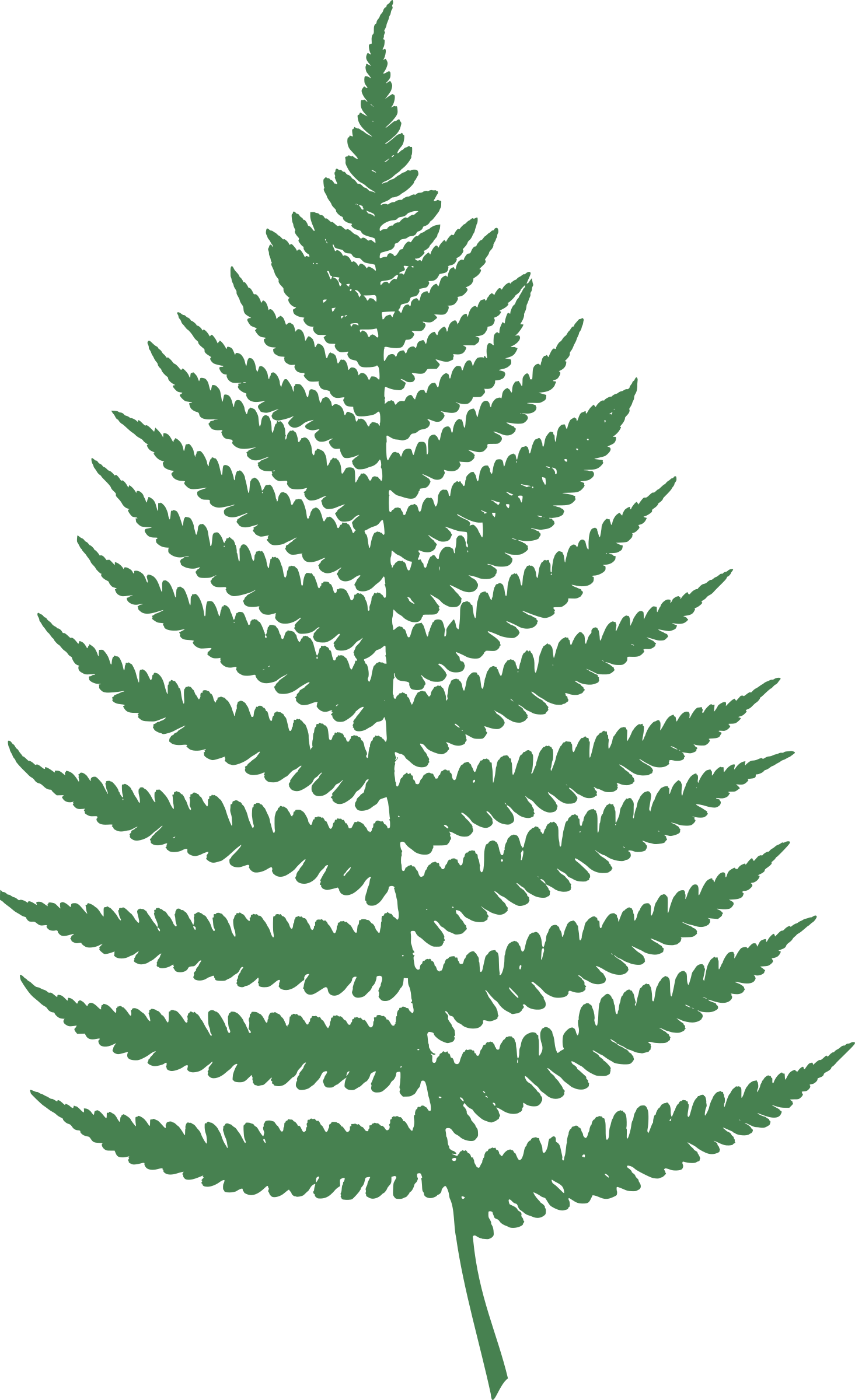 By moini pinterest leaves. Woodland clipart fern leaf