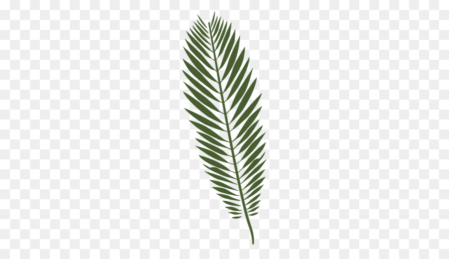 Fern clipart tropical fern. Palm tree drawing leaf