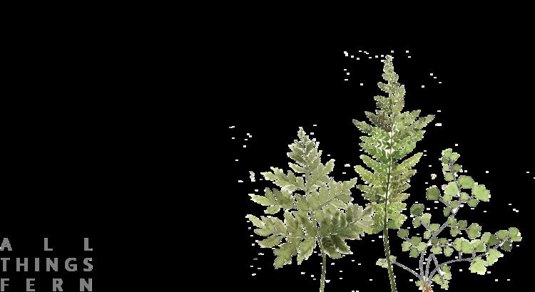 Fern clipart tropical fern.  all things design