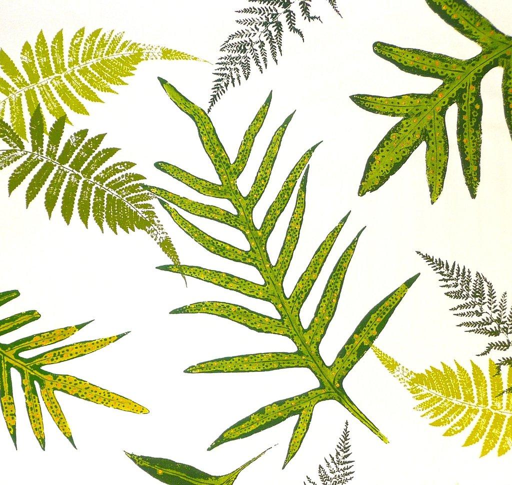 Ferns . Fern clipart tropical fern