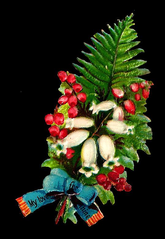 Fern clipart vintage. Antique images free flower