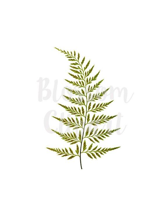 Fern clipart vintage. Clip art leaf leaves