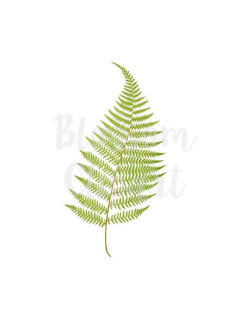 Fern clipart vintage. Leaf botanicals png for
