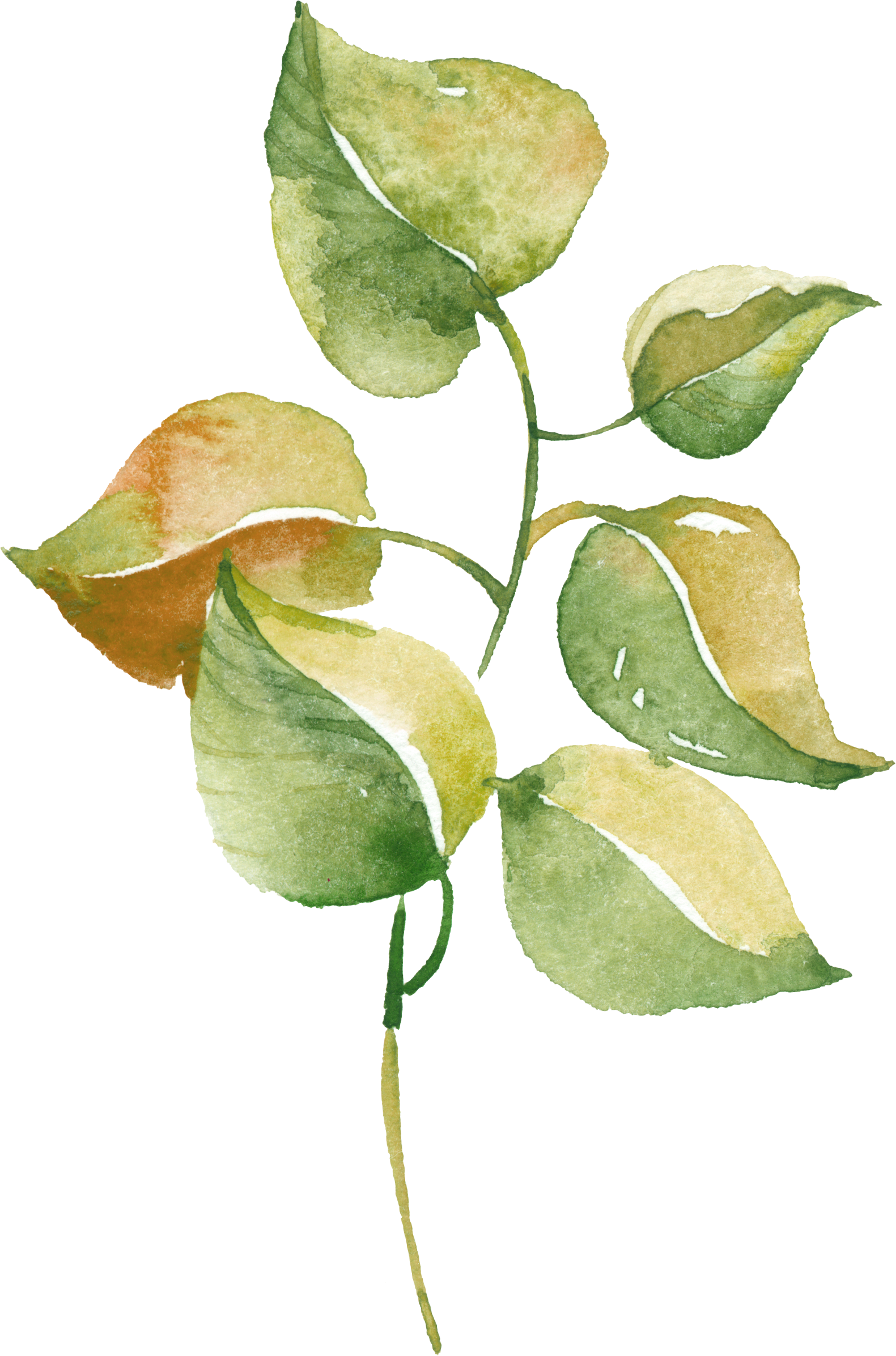 Woodland clipart green fern. Watercolour watercolor pinterest